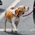 Mit Hund und Fahrrad sicher unterwegs